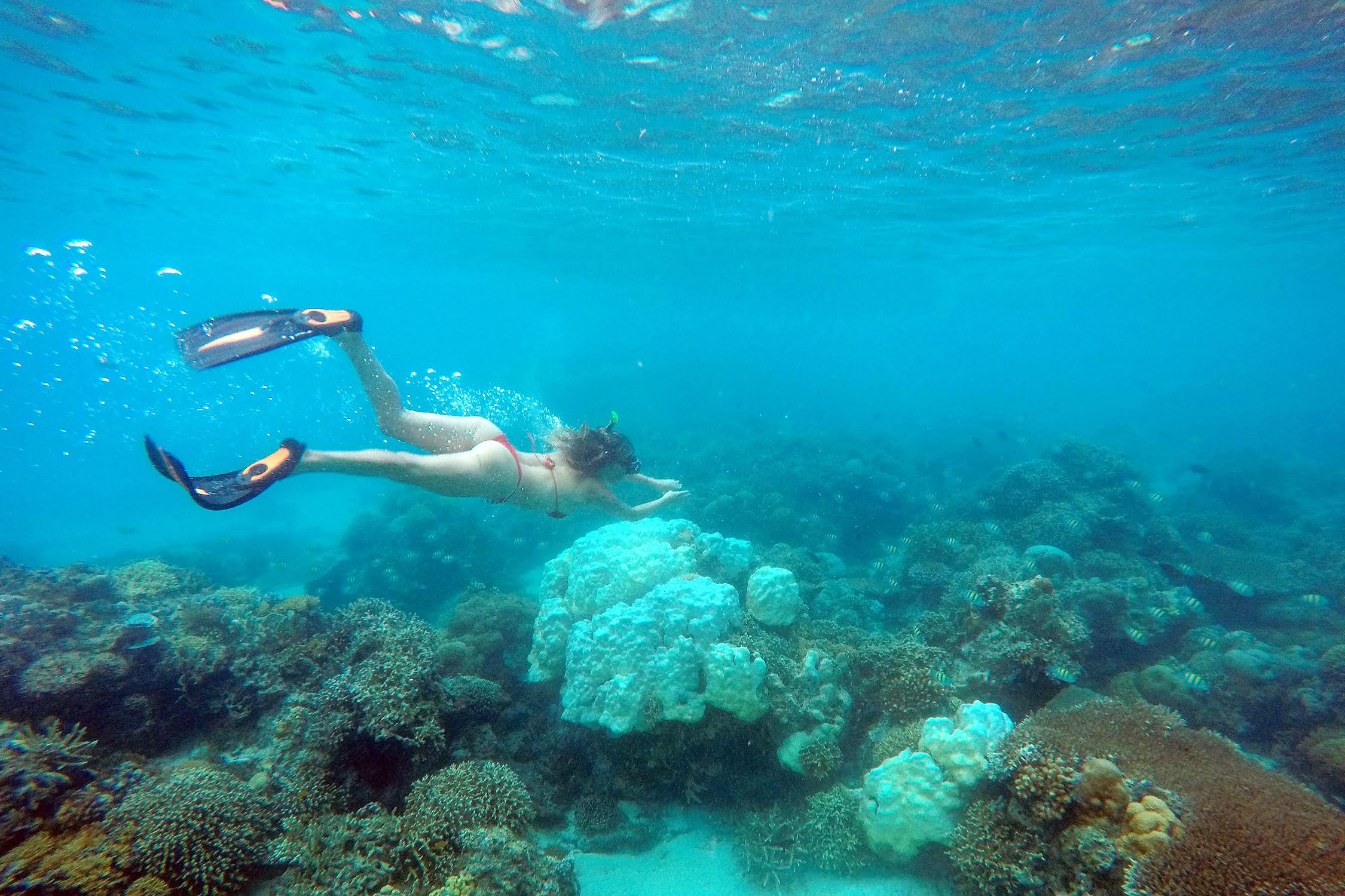 Diving Gili Islands Indonesia