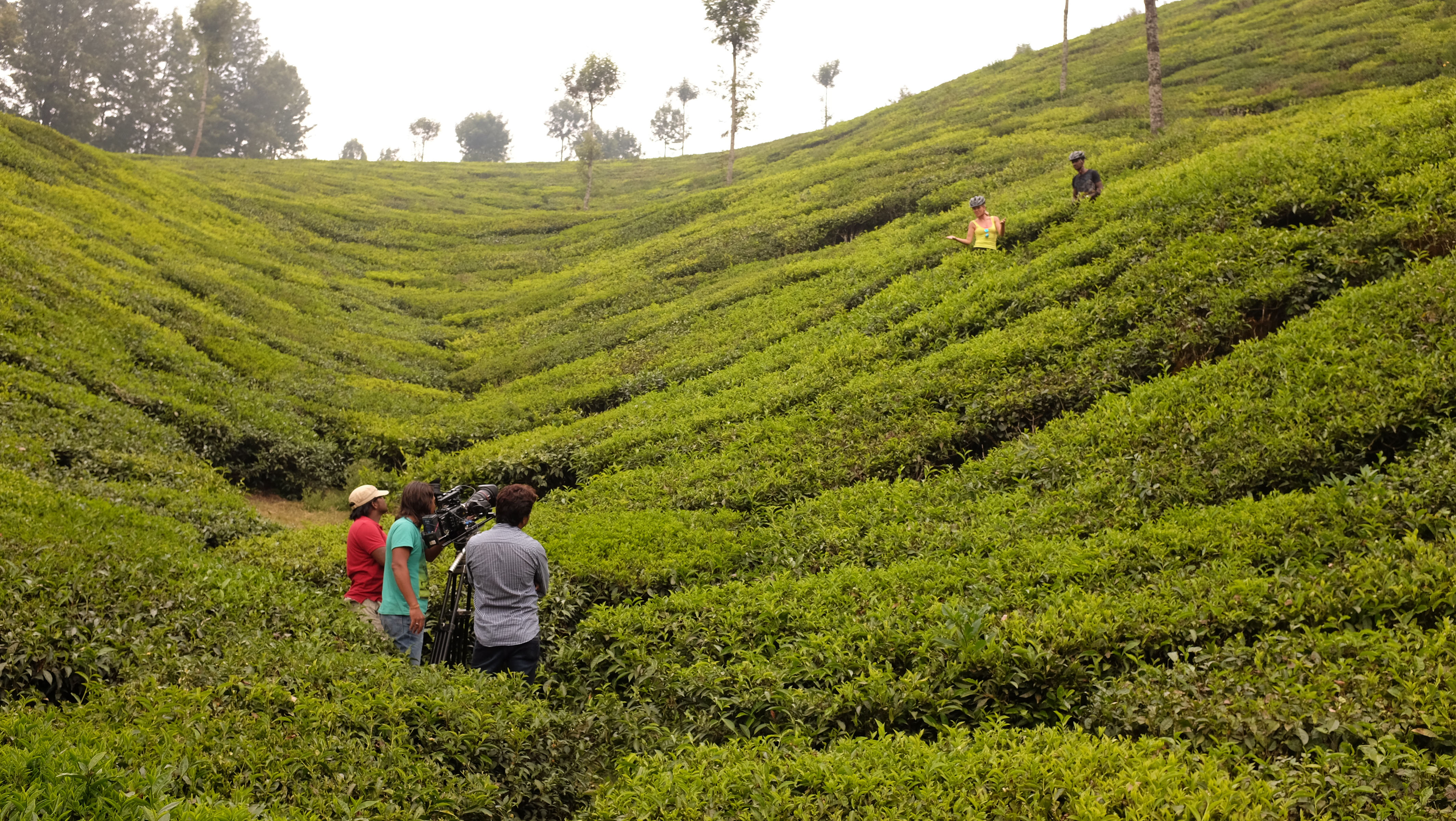 Kerala Tea Plantation Cycle
