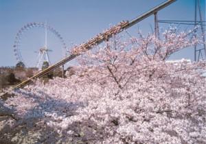 Yomiuriland Sakura Tokyo Japan