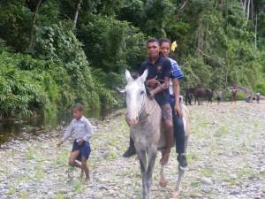 locals horse riding Fiji