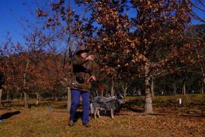 Truffle Hunting Australia